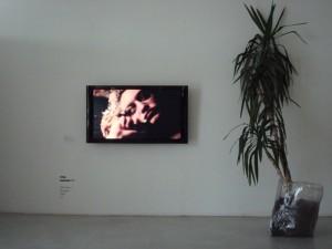 Vita Zaman. Šanchajus. Videofilmas, 2009