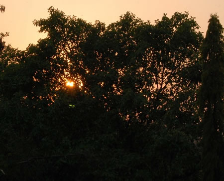 sun_flicker