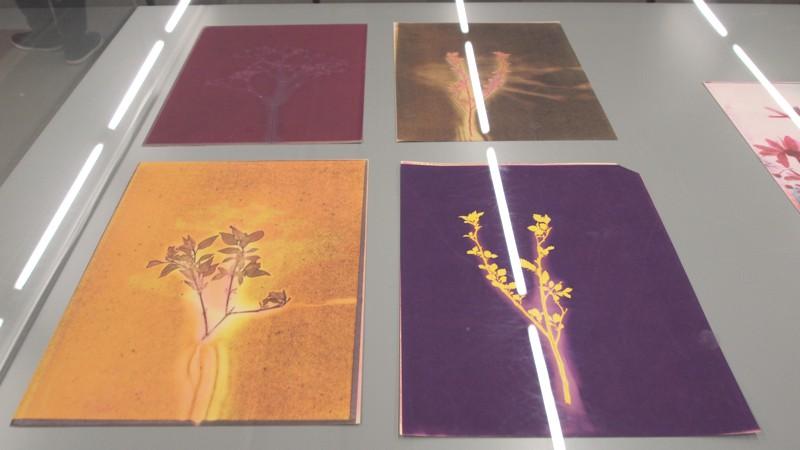 Instaliacijos-fragmentas.Imaging-with-Machine-Processes.The-Generativ     e-Art-of-Sonia-Landy-Sheridan-2