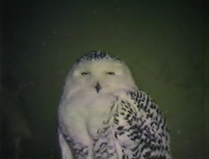 an_owl_2