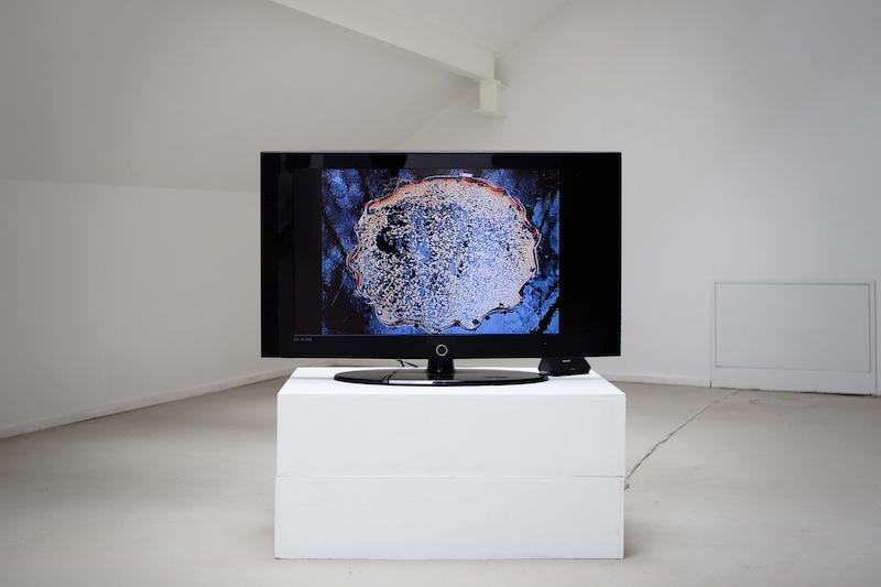 013_Ignas Gleixner, Žydėjimas, 2010